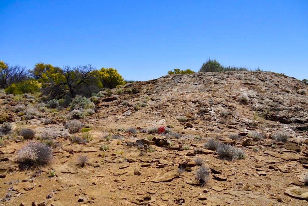 Oodnadatta Track - Strangways Springs: Quellenhügel - Outback South Australia