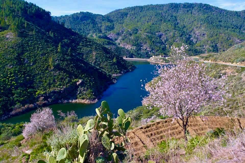 Presa de Las Hoyas - Blick auf den Stausee & Mandelblüte - Region Artenara - Gran Canaria