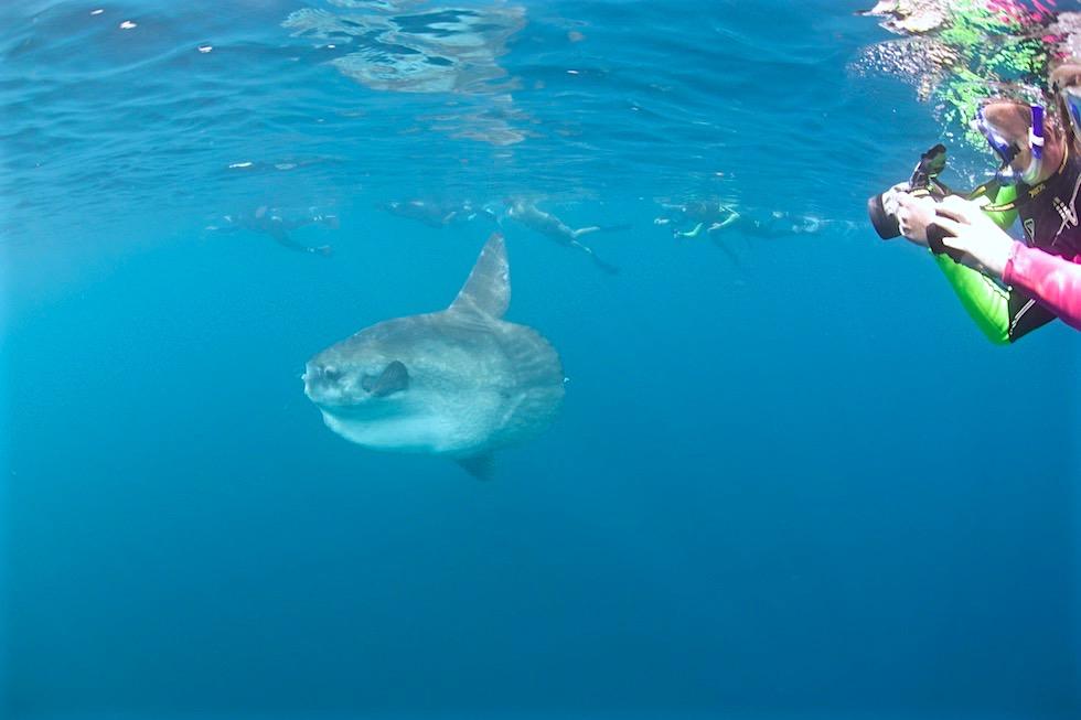 Absolute Sensation am Ningaloo Riff: Schnorcheln mit Walhaien & Mondfisch - Coral Bay EcoTours - Western Australia