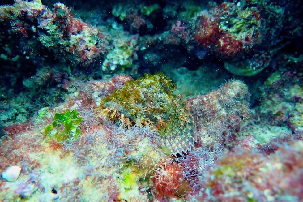 Schnorcheln mit Walhaien Tour: Steinfisch - Coral Bay & Ningaloo Reef - Western Australia