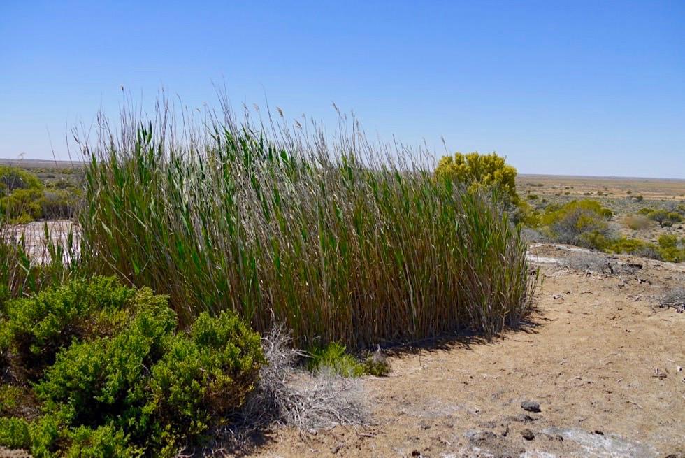 Ausgetrocknete Strangways Springs - Oodnadatta Track - Outback South Australia