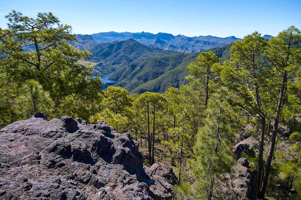 Gigantischer Kiefernwald: Naturpark Tamadaba - Ausblick vom Berg Tamadaba - Region Artenara - Gran Canaria