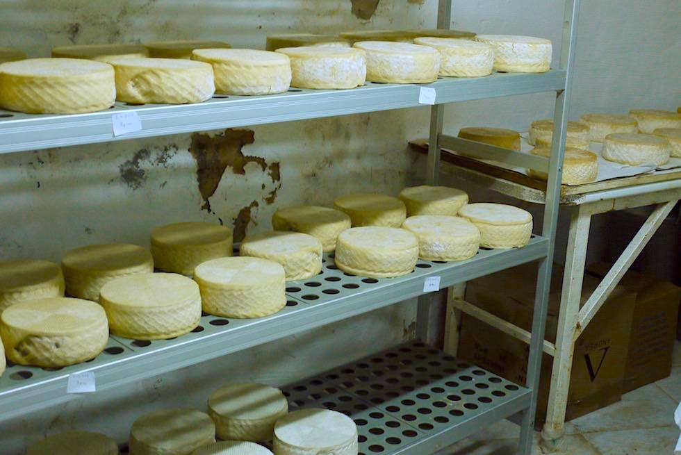 Valsequillo Genusstour - Ziegen-Käse zum Reifen ausgelegt - Gran Canaria