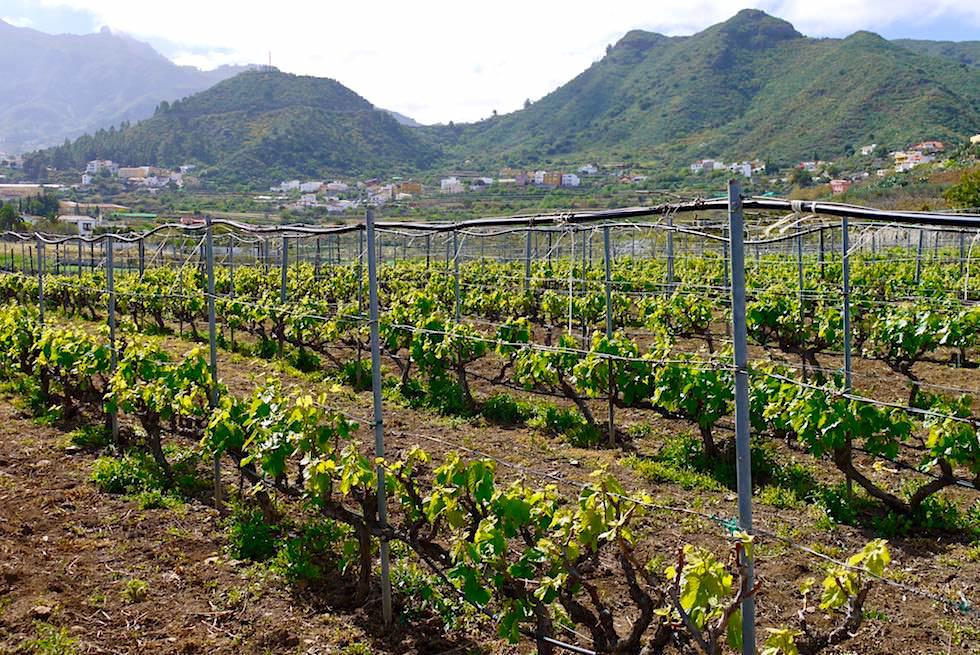 Valsequillo - Vino Cantera & Weinreben - Gran Canaria