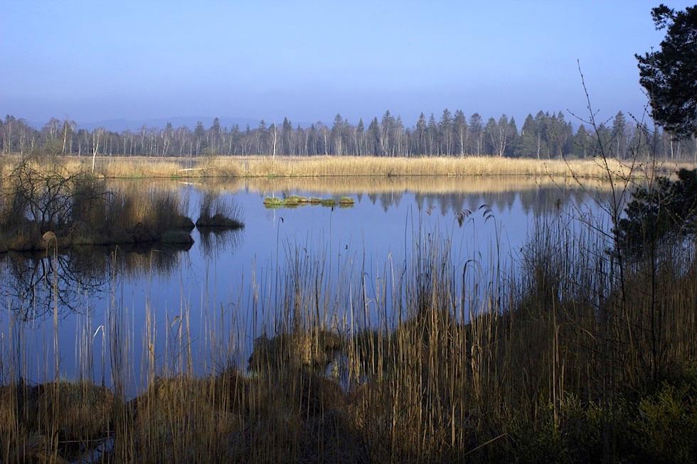 Riedsee bei Bad Wurzach - größte Moorlandschaft Süddeutschlands - Allgäu - Baden Württemberg