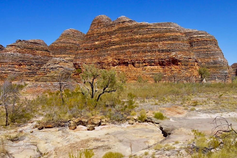 Bungle Bungle - Kegelkarst: orange-grauer Überzug - Purnululu National Park - Kimberley, Western Australia