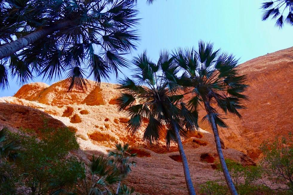 Echidna Chasm - Livistona-Palmen am Eingang der Schlucht - Bungle Bungle NP - Kimberley, Western Australia