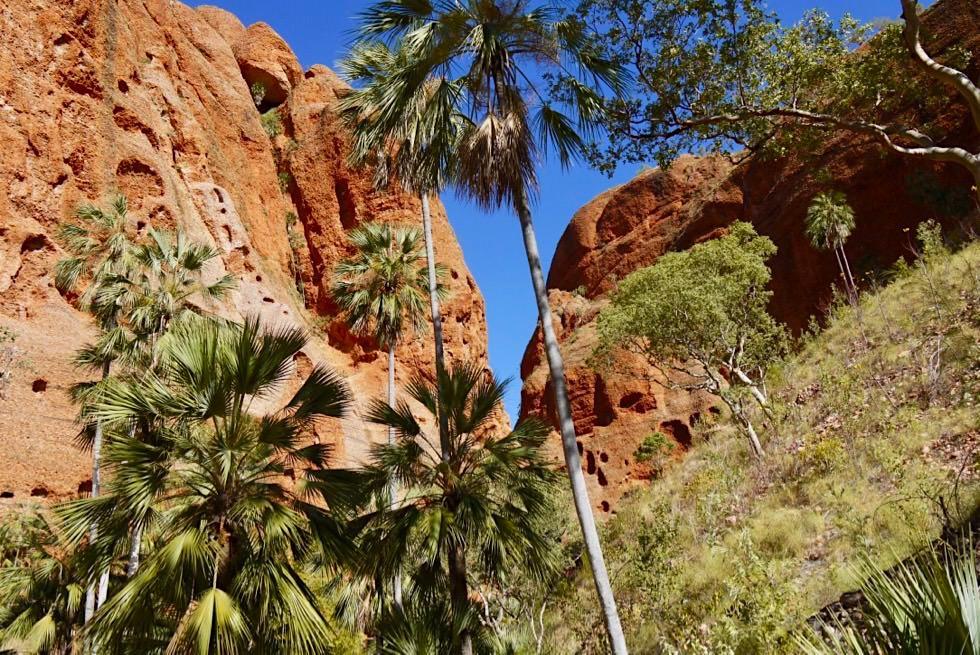 Echidna Chasm - Palmen Oase am Eingang - Purnululu National Park - Kimberley, Western Australia
