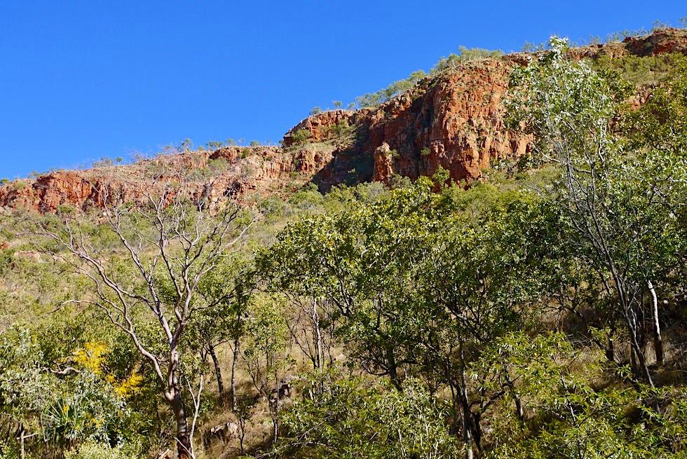 Emma Gorge - Buschlandschaft & Felsen - El Questro - Kimberley - Western Australia