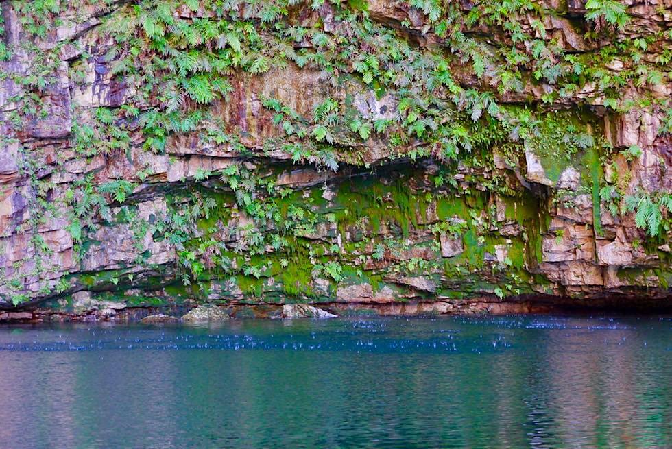 Emma Gorge Pool - Moos, Felswand & Wassertropfen - Kimberley - Western Australia