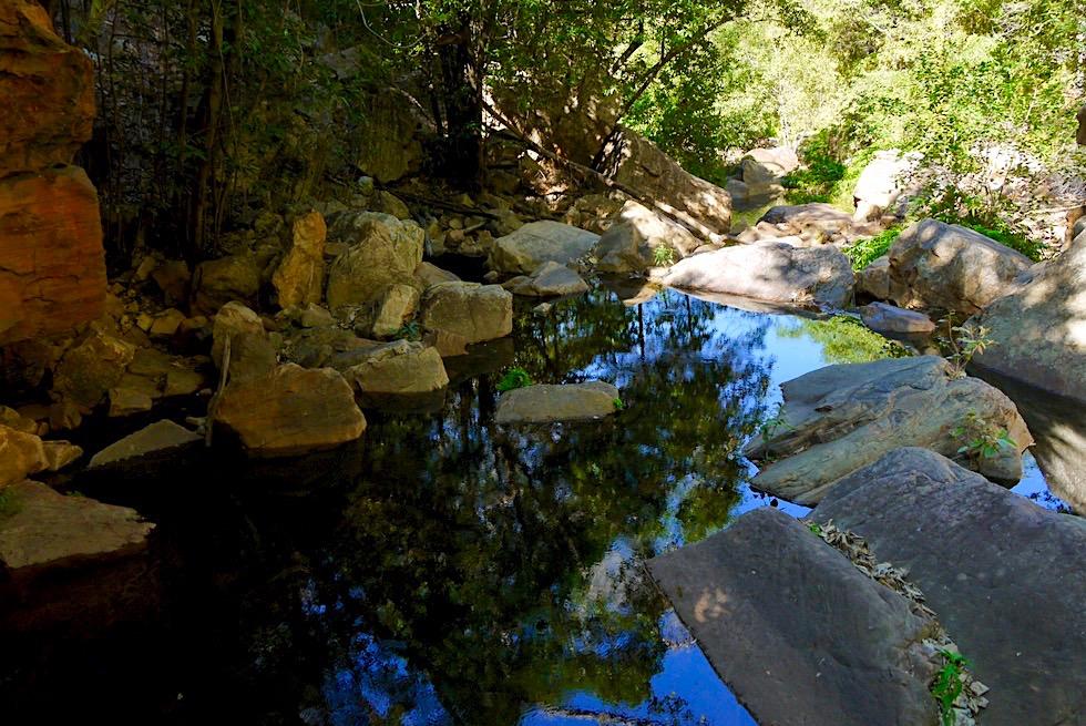 Emma Gorge Wanderung - Schattiger, spiegelnder Fern Pool - El Questro - Kimberley - Western Australia