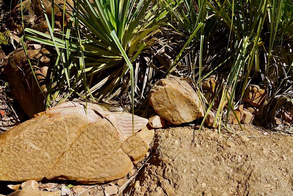Emma Gorge Wanderung - Lustig aussehende Steine - Kimberley - Western Australia