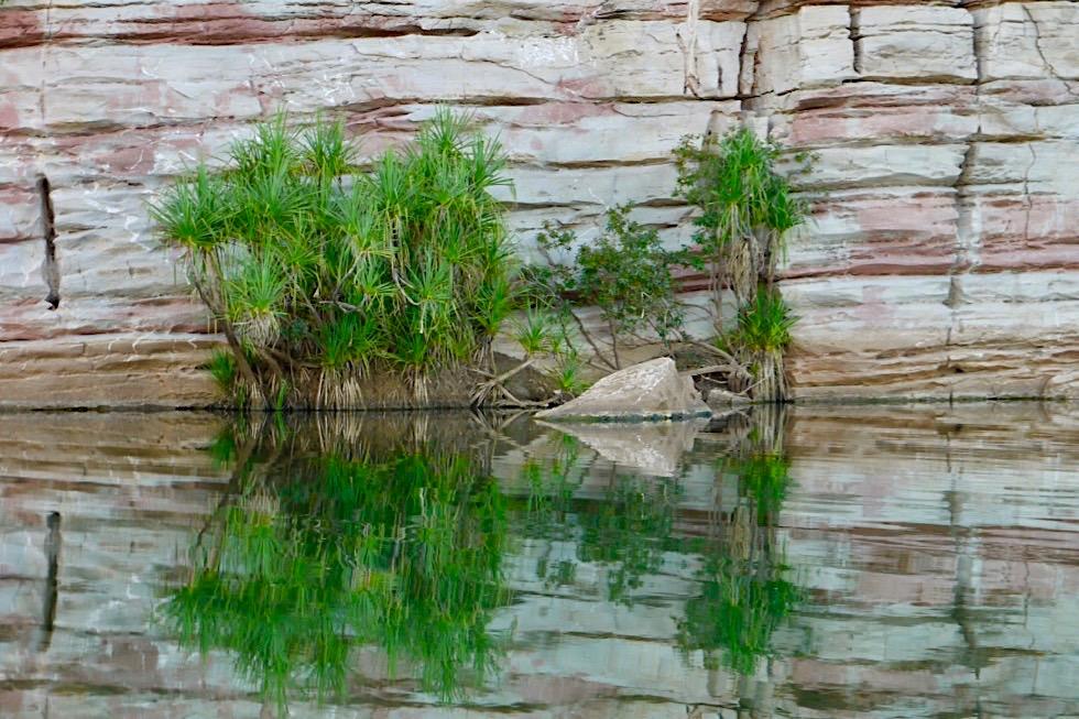 Geikie Gorge Sunset Tour - Felsen, Palme & Spiegelungen - Fitzroy River - Kimberley - Western Australia