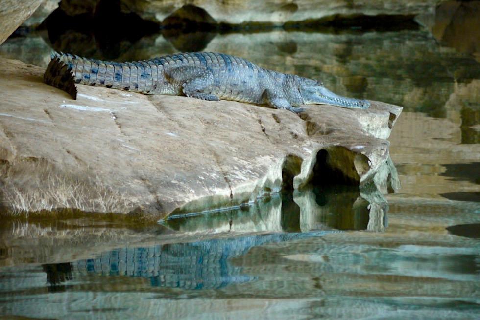 Geikie Gorge Sunset Boat Tour - Krokodil, Fels & Spiegelung - Fitzroy River - Kimberley - Western Australia