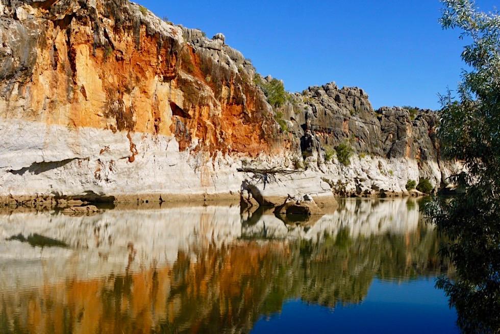 Geikie Gorge Reef Walk - leuchtende Felswand spiegelt sich im Fitzroy River - Kimberley - Western Australia