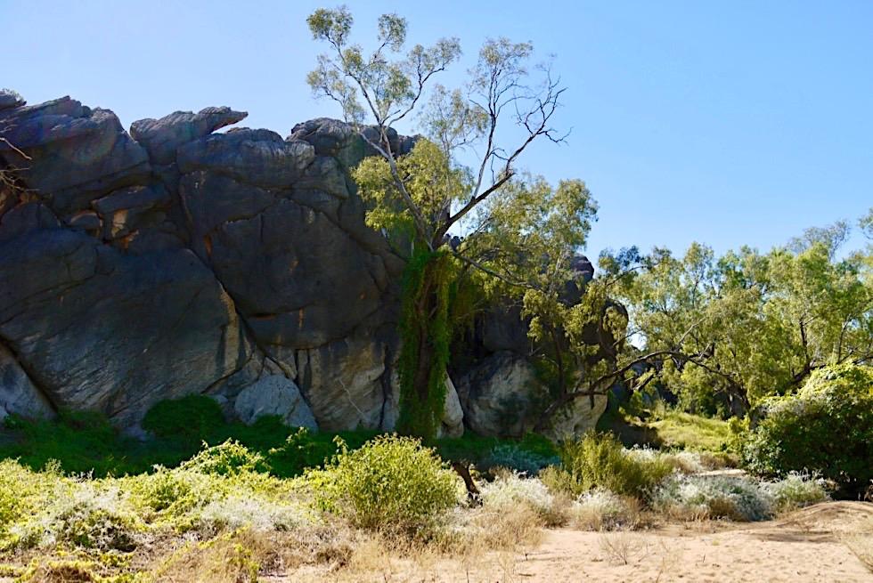 Geikie Gorge Reef Walk - entlang der Westseite der Schlucht - Kimberley, Western Australia