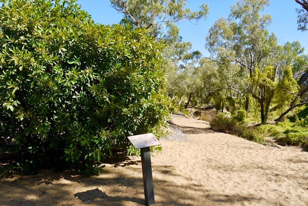 Geikie Gorge Reef Walk - Schautafeln erklären Flora - Fitzroy River - Kimberley, Western Australia