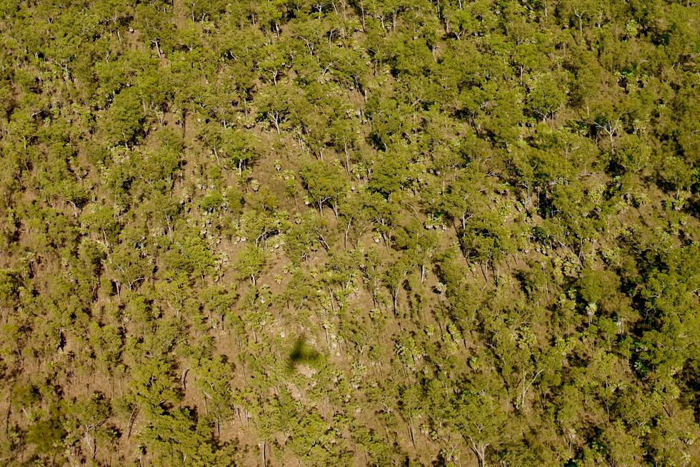 Kimberley Outback - Eukalyptuswald aus der Vogelperspektive - Western Australia