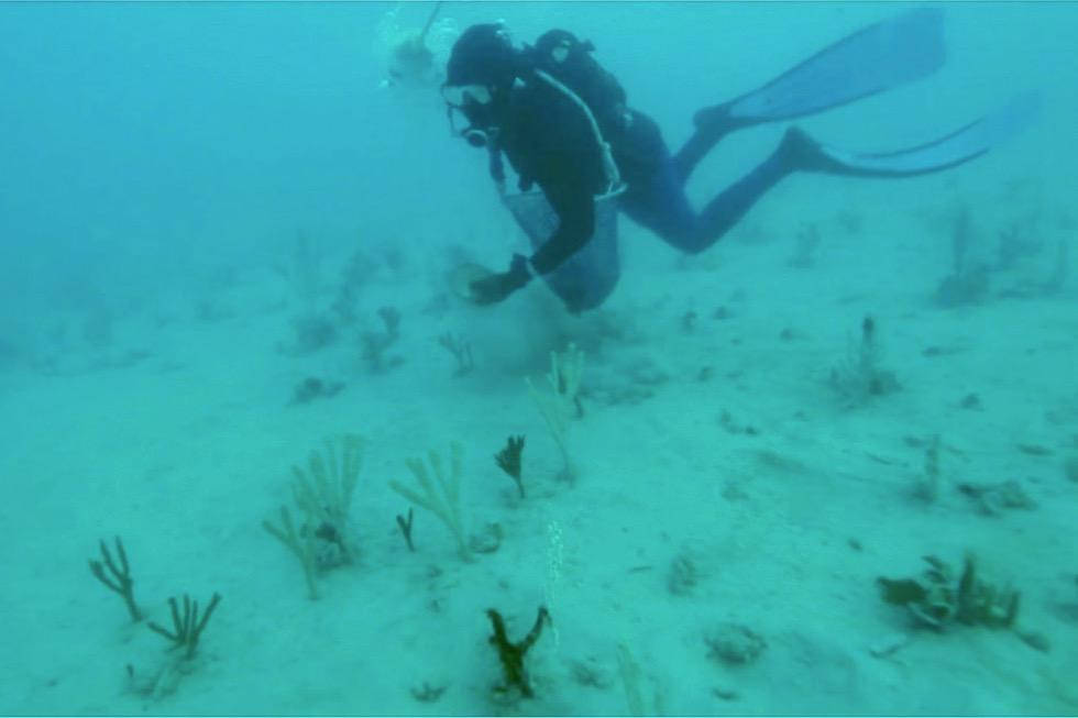 Muscheln sammeln für Perlenzucht - Kimberley - Western Australia
