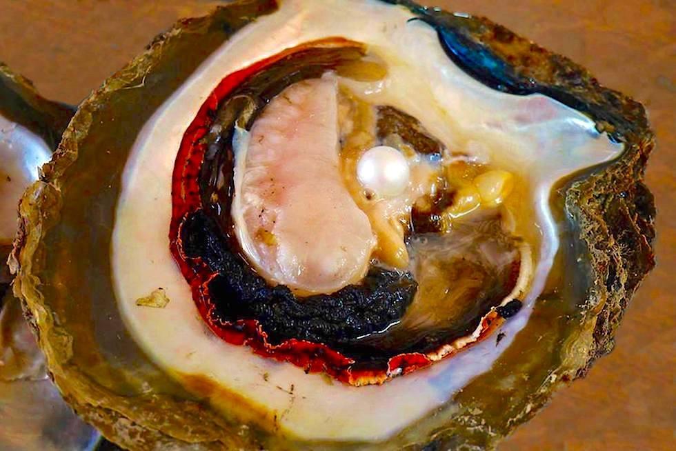 Wie entstehen Südsee Perlen, die Juwelen des Meeres - Perlenzucht & Perlenfarm - Broome - Kimberley - Western Australia