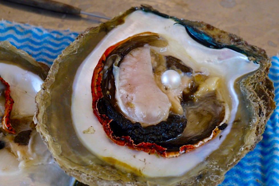 Pinctada Maxima - Aus der Muschel herausoperierte Perle - Willie Creek Pearl Farm - Kimberley - Western Australia