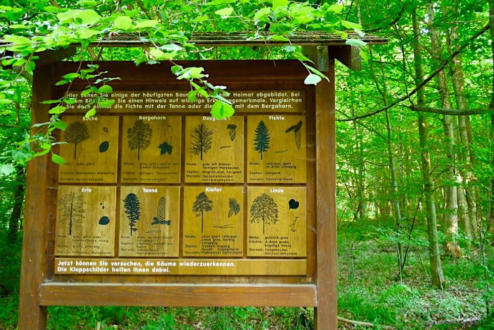 Schautafel zur Baumbestimmung - Wiesengänger Route - Wandertrilogie Allgäu - Bayern
