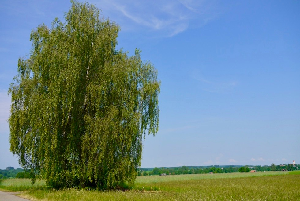 Wandertrilogie Allgäu: Wiesengänger Route - Wiesen, Bäume, weite Ausblicke - Bayern