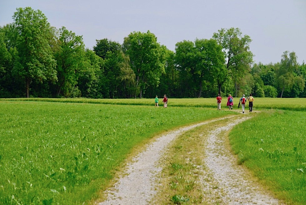 Wiesengänger Etappe 02 - Typischer Routenverlauf - Allgäu - Bayern