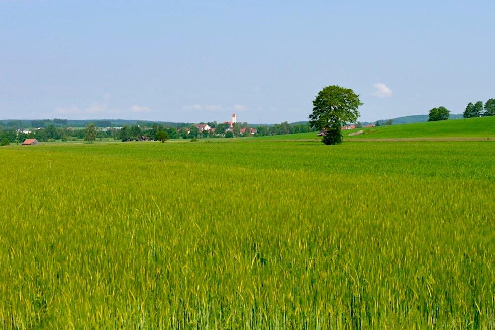 Wiesengänger Etappe 03 - grüne weite Terrassen - Wandertrilogie Allgäu - Bayern