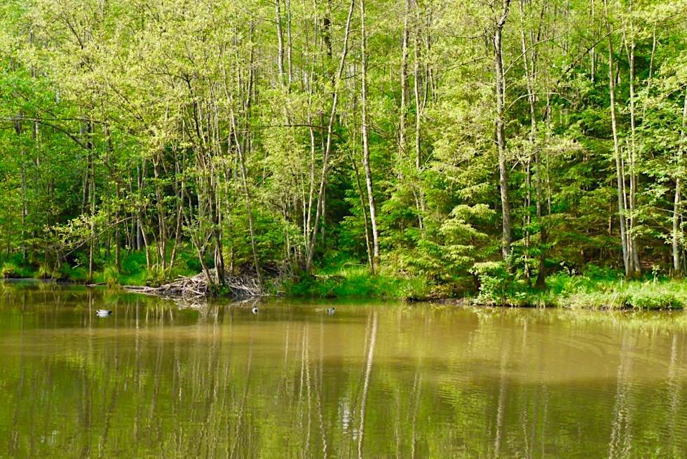 Wiesengänger Etappe 03 - Waldsee mit Enten - Wandertrilogie Allgäu - Bayern