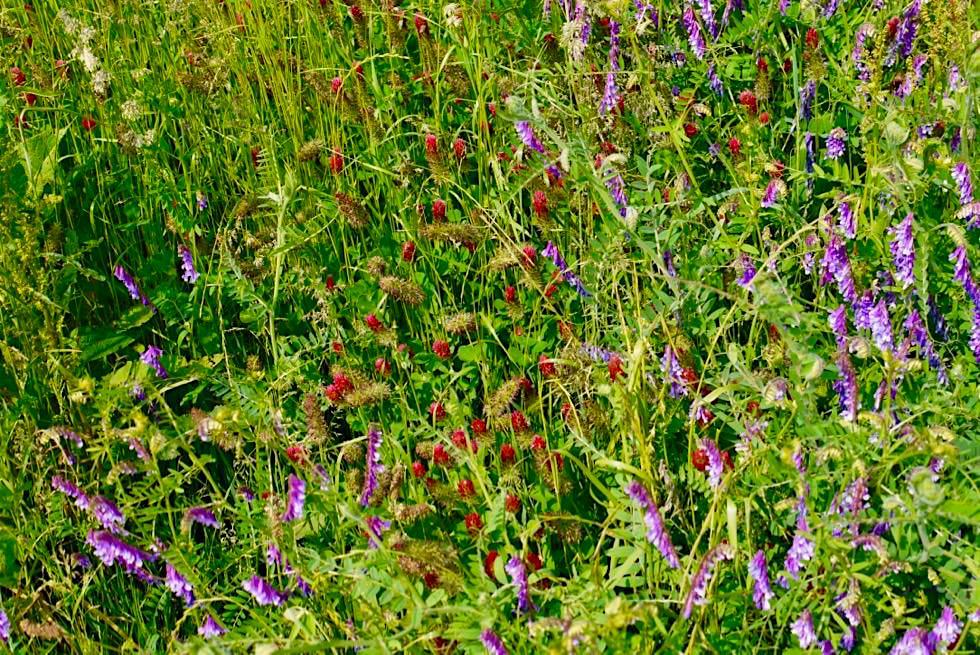 Wiesengänger Etappe 03 - Zauberschöne Wildblumenwiesen - Wandertrilogie Allgäu - Bayern