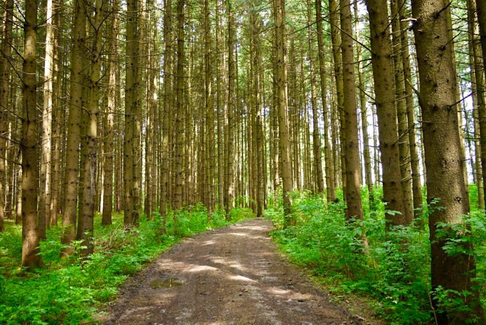 Wandertrilogie Wiesengänger Route 02 - Lichter Wald - Allgäu - Bayern