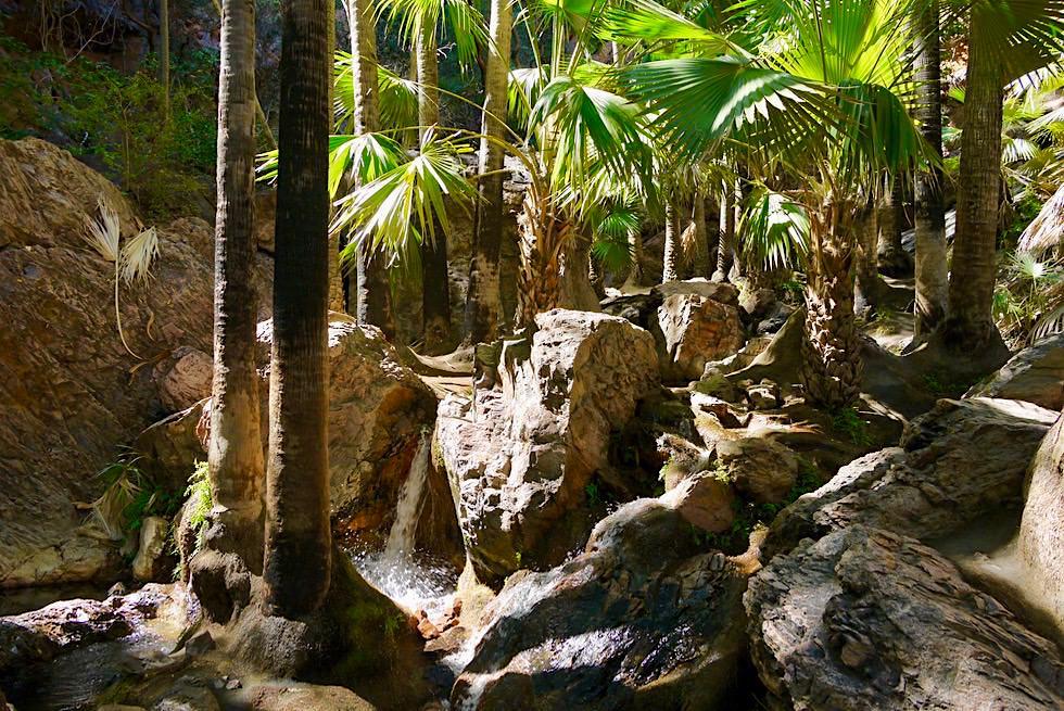 Zebedee Falls inmitten einer Palmenoase - El Questro - Kimberley - Western Australia