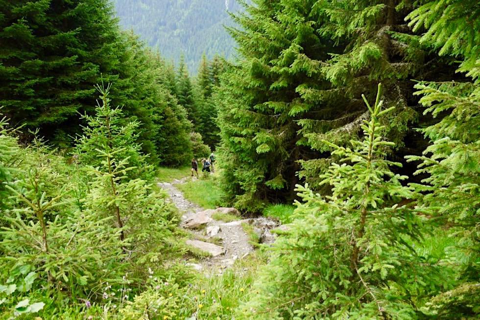 Friedrichshafener Hütte - Steiler Aufstieg durch den Wald - Ischgl, Paznaun - Österreich