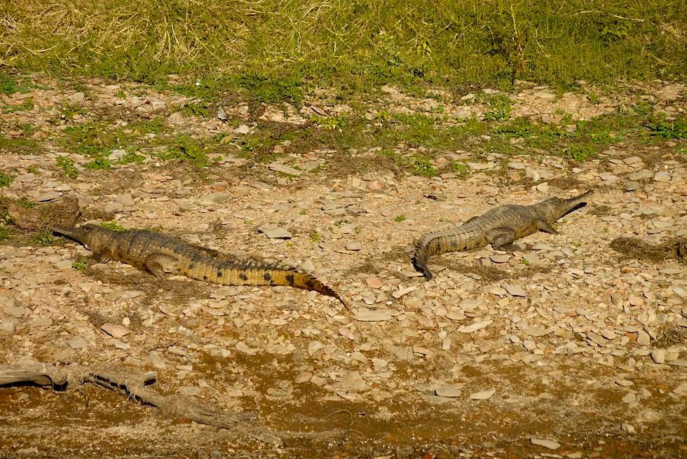 Lake Argyle: hier leben mehr als 25.000 scheue Australien-Krokodile - Kimberley - Western Australia