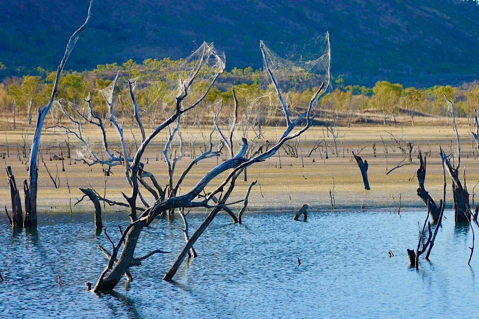 Lake Argyle - Golden Orb Weaver oder Seidenspinnen & ihre extrem stabilen Netze - Kimberley - Western Australia