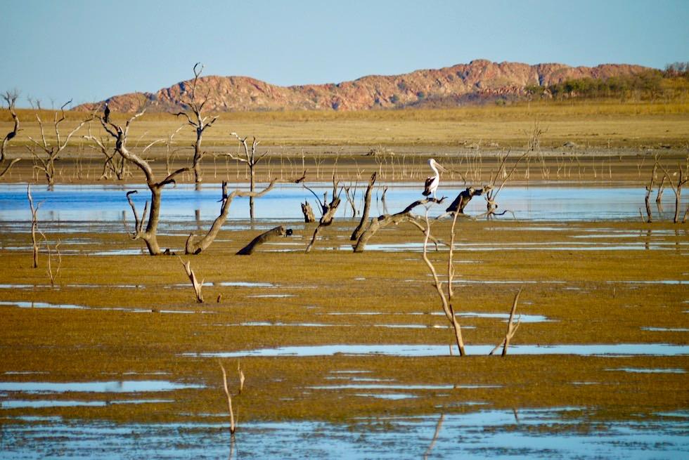 Lake Argyle - Pelikane & 300 Vogel-Exemplare auf den Vogel-Inseln - Kimberley - Western Australia