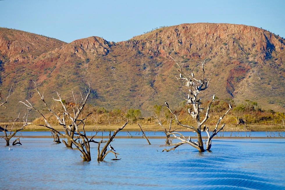 Lake Argyle - Vögel auf totem Ästen, die aus dem See ragen - Kimberley - Western Australia