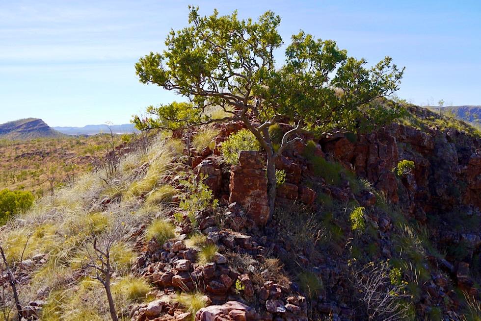 Lake Argyle Wanderungen - Ord River Gorge Walk Trail - Rückweg - Kimberley - Western Australia