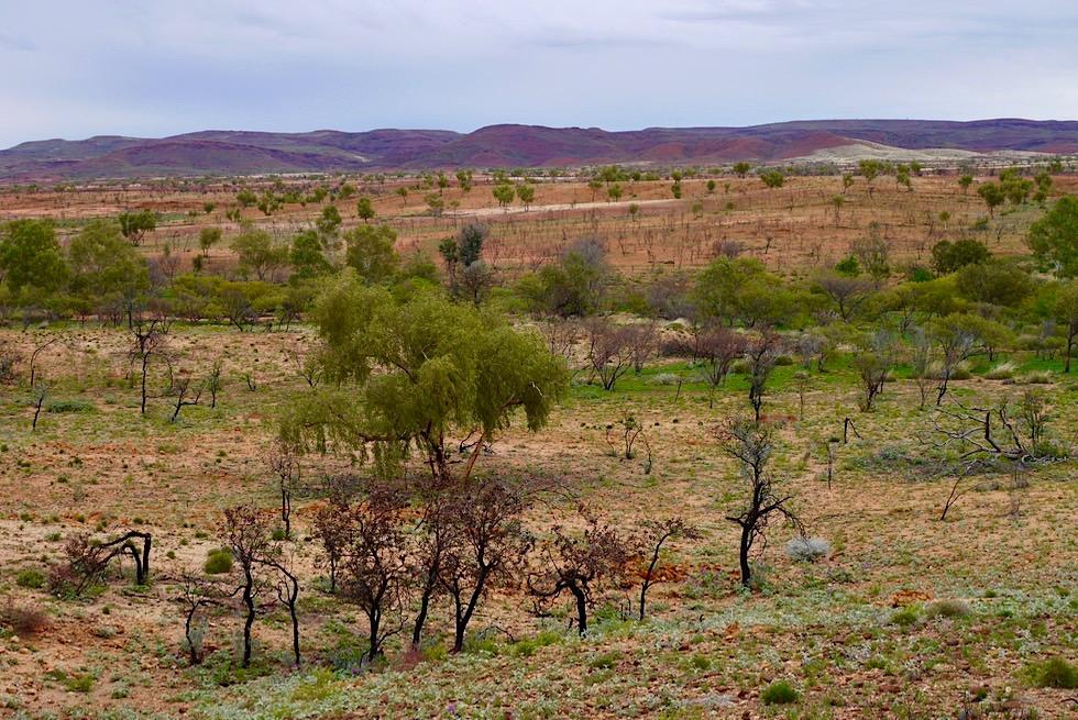 Pilbara - typisches Landschaftsbild im reichen Zentrum der Region - Western Australia