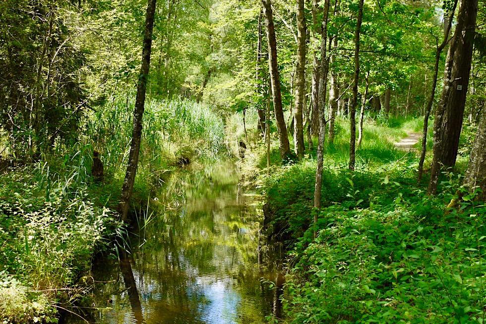 Wurzacher Ried - Entwässerungsgräben Oberes Ried - Größtes Hochmoor Mitteleuropas - Baden-Württemberg