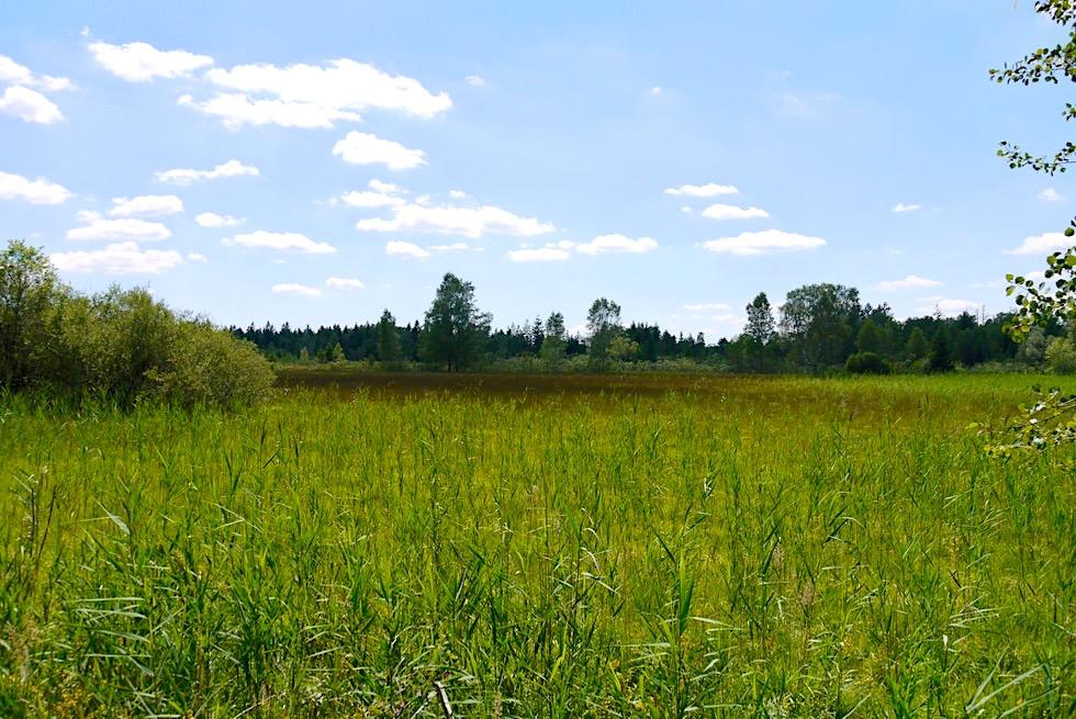 Wurzacher Ried - Moorlandschaft Oberes Ried - Größtes Hochmoor Mitteleuropas - Baden-Württemberg