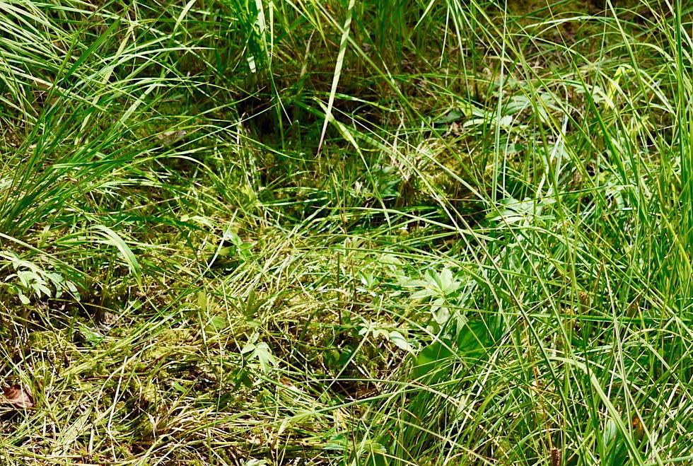 Wurzacher Ried - Schwingrasen & Torfmoose bilden das Hochmoor - Baden-Württemberg