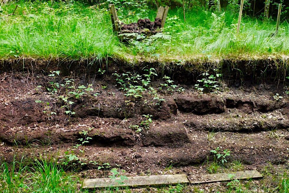 Wurzacher Ried - Geschichte des Torfabbaus erzählt auf dem Naturlehrpfad durch das Hochmoor - Baden-Württemberg