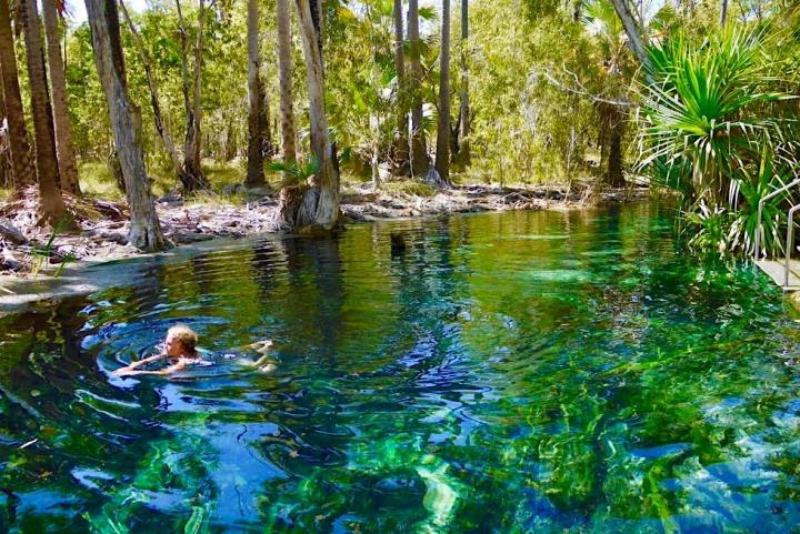 Bitter Spings Thermal Pools: Warme kristallklare Quellen laden zum Schwimmen ein - Mataranka - Northern Territory