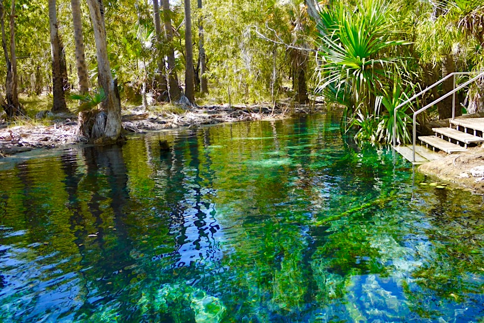 Bitter Springs Thermal Pools - Einstieg in kristallklares, 32°C warmes Quellwasser - Elsey National Park - Northern Territory