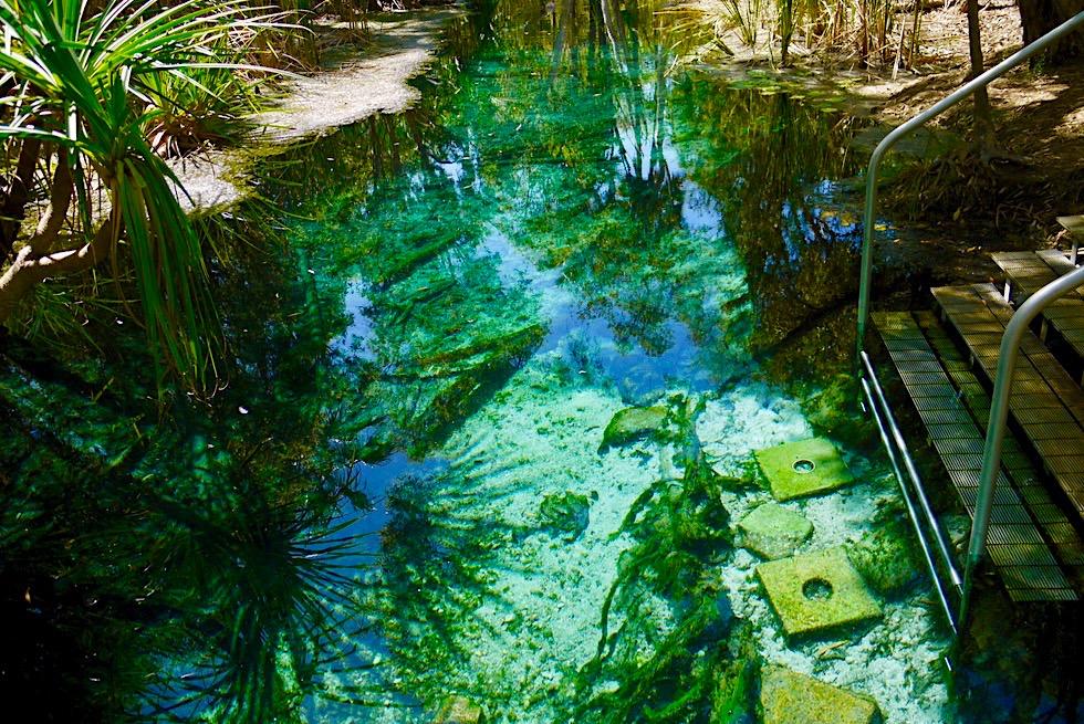 Bitter Springs - Faszinierend & Ursprünglich! - Kristallklare, leuchtende, warme Quellen - Elsey National Park - Northern Territory