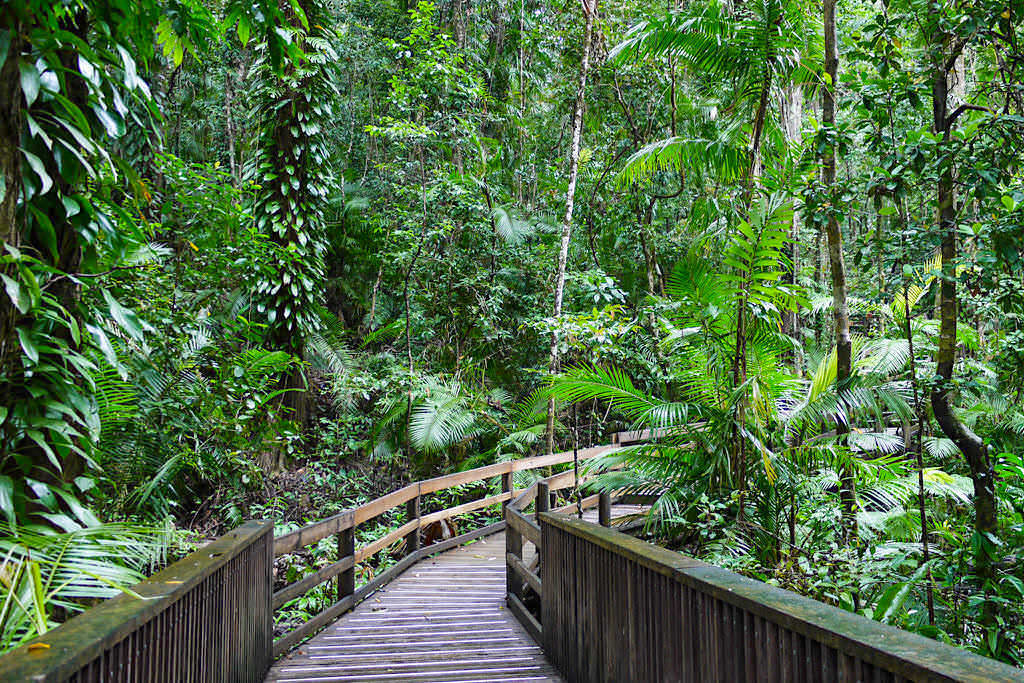 Daintree Nationalpark - Wunderschöner Jindalba Boardwalk mit vielen Regenwald Informationen - Wet Tropics Queensland