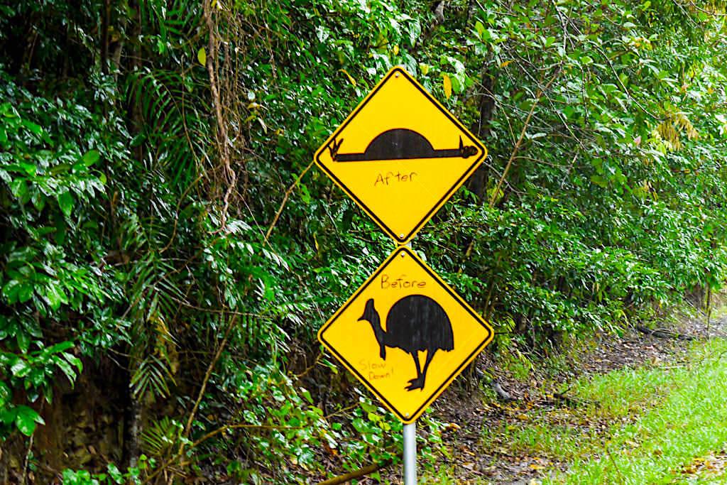 Daintree National Park - Lustiges Kasuar Straßenschild warnt vor schnellem fahren - Far North Queensland
