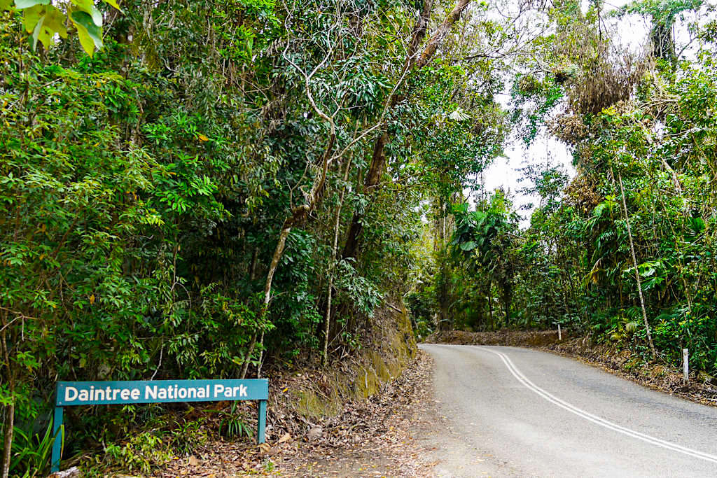 Daintree National Park, der älteste Regenwald Australiens - Eingang zur Cape Tribulation Section - Far North Queensland